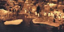 WebKamera Houston - Pinguine in Moody Gardens