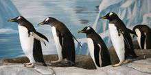 WebKamera Milwaukee - Pinguine in der Voliere